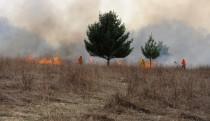 Field during prescribed burn