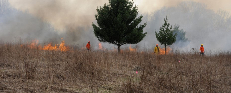 Field during prescribed burn