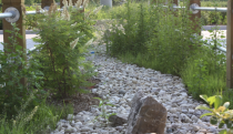 The bioswale in the spring