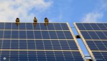 Birds on a solar panel