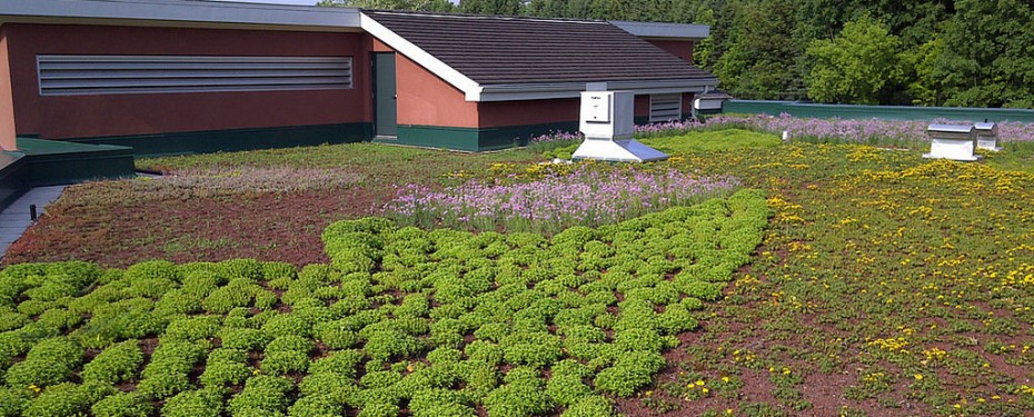 Finished Green Roof