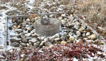 Green Roof drain to collect rainwater