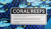 Information about coral reefs