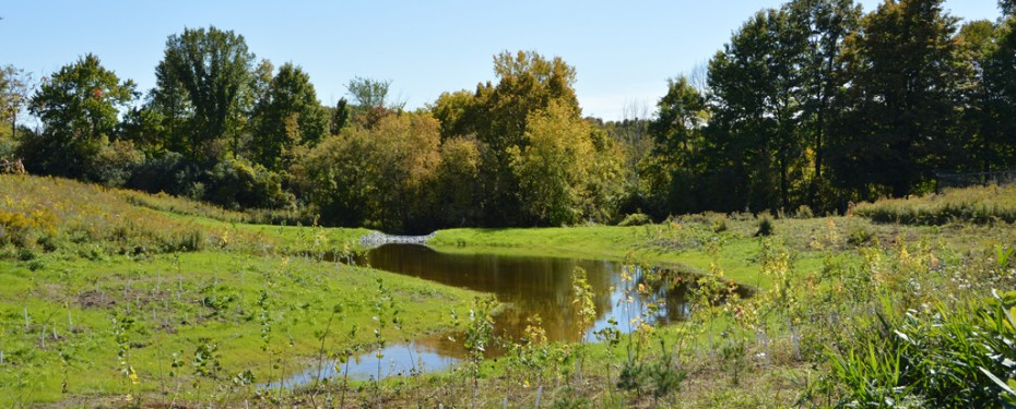 Newly restored wetland