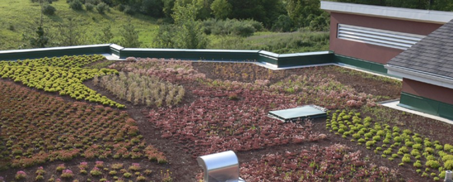 Overview of Green Roof