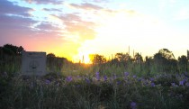 Sunset on the green roof