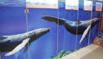 Whales in green washrooms