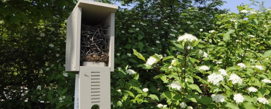 Occupied birdhouse